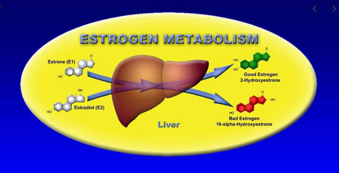 Breast Health and the Importance of Estrogen Detoxification
