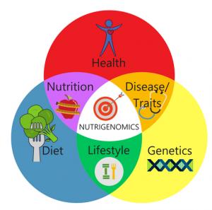 estrogen detoxification, nutrigenomics